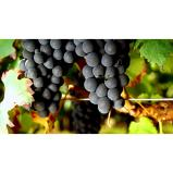 Fresh Grape Juice and Grapes for Winemaking- PA, NY, OH