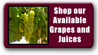 Grapes and Juices for Commercial Wine Making