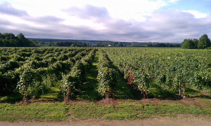 Presque Isle Wine Cellars Lake Erie Region Vineyards